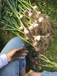 Jacquelin Suskin Garlic